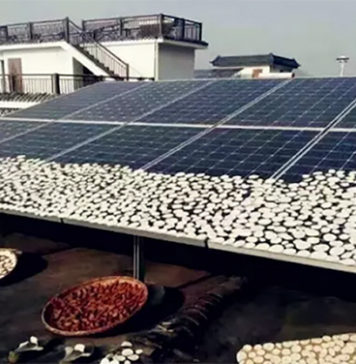 Peasants Dry Crops on the Photovoltaic Modules