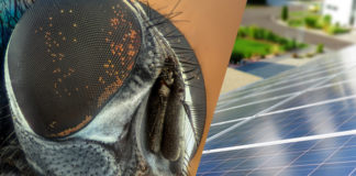 Compound Eyes of a Fly and Solar PV Perovskites