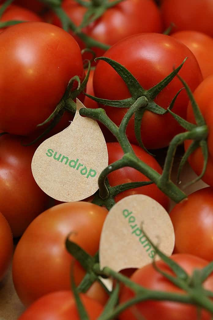 Sundrop Solar Farm Tomatoes at Port Augusta