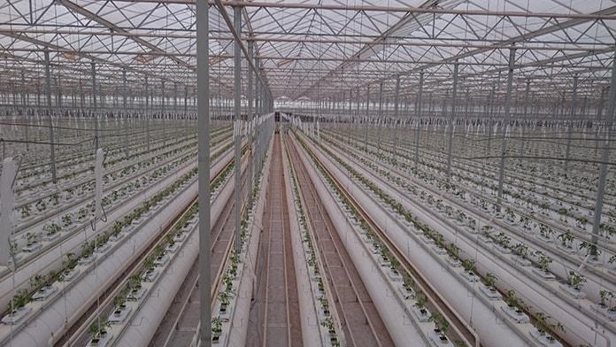 Sundrop Solar Farm Irrigation System at Port Augusta