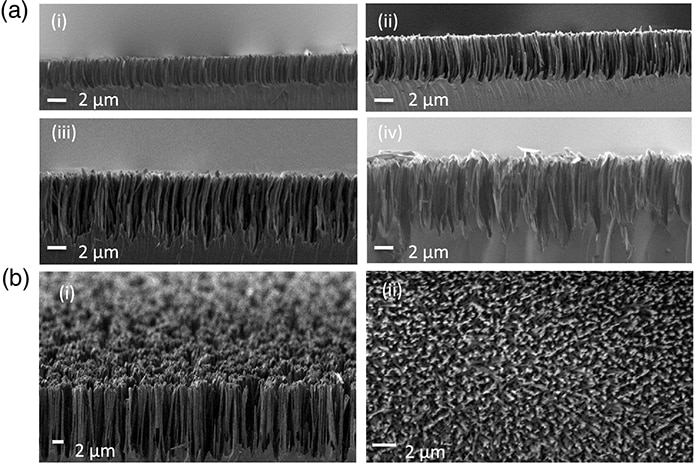 Cross-Section SEM Images of Nanostructured Grass-Like Glass
