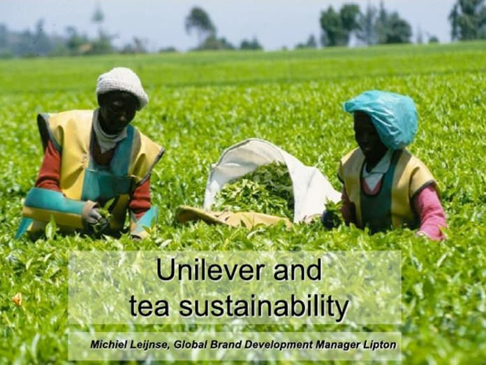Unilever Tea Sustainability Development