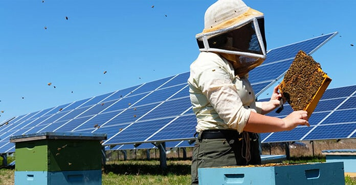 "A ""Pollinator-Friendly"" Photovoltaic Site Offering Refuge for Declining Species Such as Rusty Patched Bumblebees"