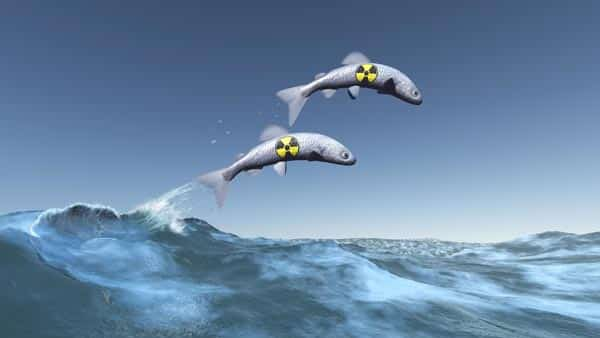 Fishes in the Ocean Might Carry Radioactive Elements From the Released Nuclear Waste From the Fukushima Nuclear Plant